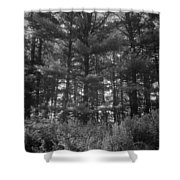 Tree Of Peace Shower Curtain