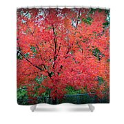 Tree On Fire Shower Curtain