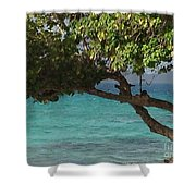 Tree Over Sapphire Beach Shower Curtain
