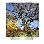 Tree Photo 993 Shower Curtain