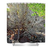 Tree Rock And Life Shower Curtain
