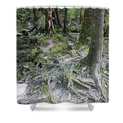 Tree Roots And Lithia Springs Shower Curtain
