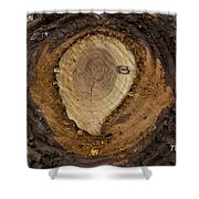 Tree Sap Shower Curtain