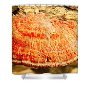 Tree Shell In Shades Of Pumpkin Shower Curtain