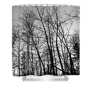 Tree Silhouette Bw Shower Curtain