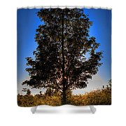 Tree Silhouette Shower Curtain
