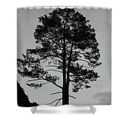 Tree Silhouette In The Dark Shower Curtain