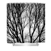 Tree Silhouettes In Black And White Shower Curtain
