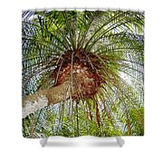 Tree Spray Shower Curtain