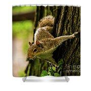 Tree Squirrel Shower Curtain