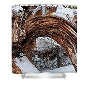 Tree Stump Arch Shower Curtain