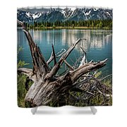Tree Stump On The Northern Shore Of Jackson Lake At Grand Teton National Park Shower Curtain