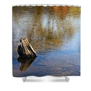 Tree Stump Surrounded By Water Shower Curtain