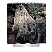 Tree Stump Shower Curtain