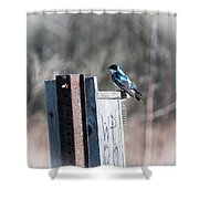 Tree Swallow Shower Curtain