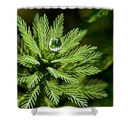 Tree Top Dew Drop Shower Curtain