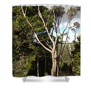 Tree Tops And Beyond Shower Curtain