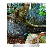Tree Trunk By Jordan Pond In Acadia National Park-maine Shower Curtain