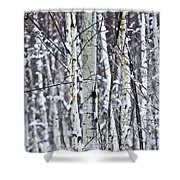 Tree Trunks Covered With Snow In Winter Shower Curtain