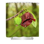 Tree Waking Up From Winter Shower Curtain