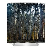 Tree Wall Shower Curtain