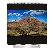 Tree With A View Shower Curtain