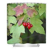 Tree With Red Berry Shower Curtain