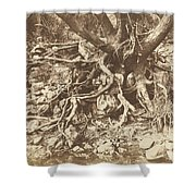 Tree With Tangle Of Roots Shower Curtain