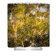 Tree With V Shaped Branches Shower Curtain