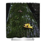 Tree With Yellow Leaf Shower Curtain