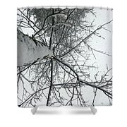 Tree Wrapped In Snow Shower Curtain