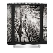 Treeology Shower Curtain
