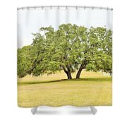 Trees 004 Shower Curtain