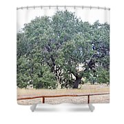 Trees 006 Shower Curtain