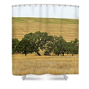 Trees 007 Shower Curtain