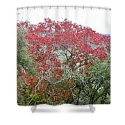 Trees 010 Shower Curtain