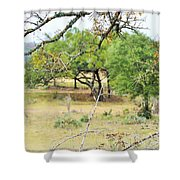 Trees 013 Shower Curtain