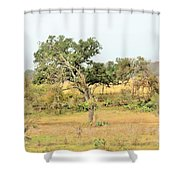 Trees 015 Shower Curtain