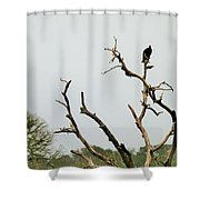 Trees 017 Shower Curtain