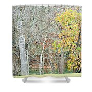 Trees 024 Shower Curtain