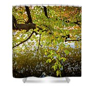 Trees 9684 Shower Curtain