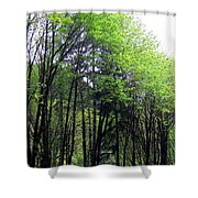 Trees Along The Umpqua River 2 Shower Curtain