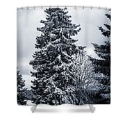 Trees And Snow Shower Curtain