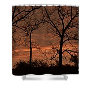Trees And Sunrise Shower Curtain
