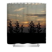 trees and West Shower Curtain