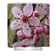 Trees Art Prints Canvas Pink Blossoms Spring Blue Sky Baslee Troutman Shower Curtain