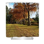 Trees At The Park Shower Curtain
