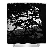 Trees Black And White - San Salvador Shower Curtain