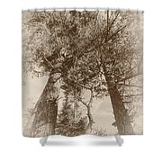 Trees Colliding Shower Curtain
