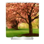 Trees In A Row Shower Curtain